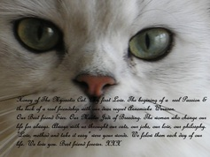Always with us throught our cats, our jobs, our love, our philosphy.